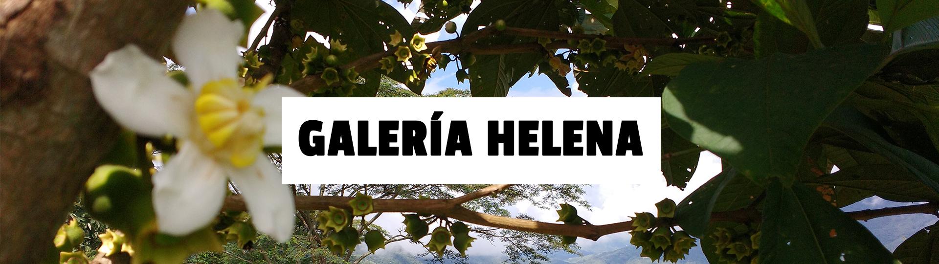 galeria-Helena-1