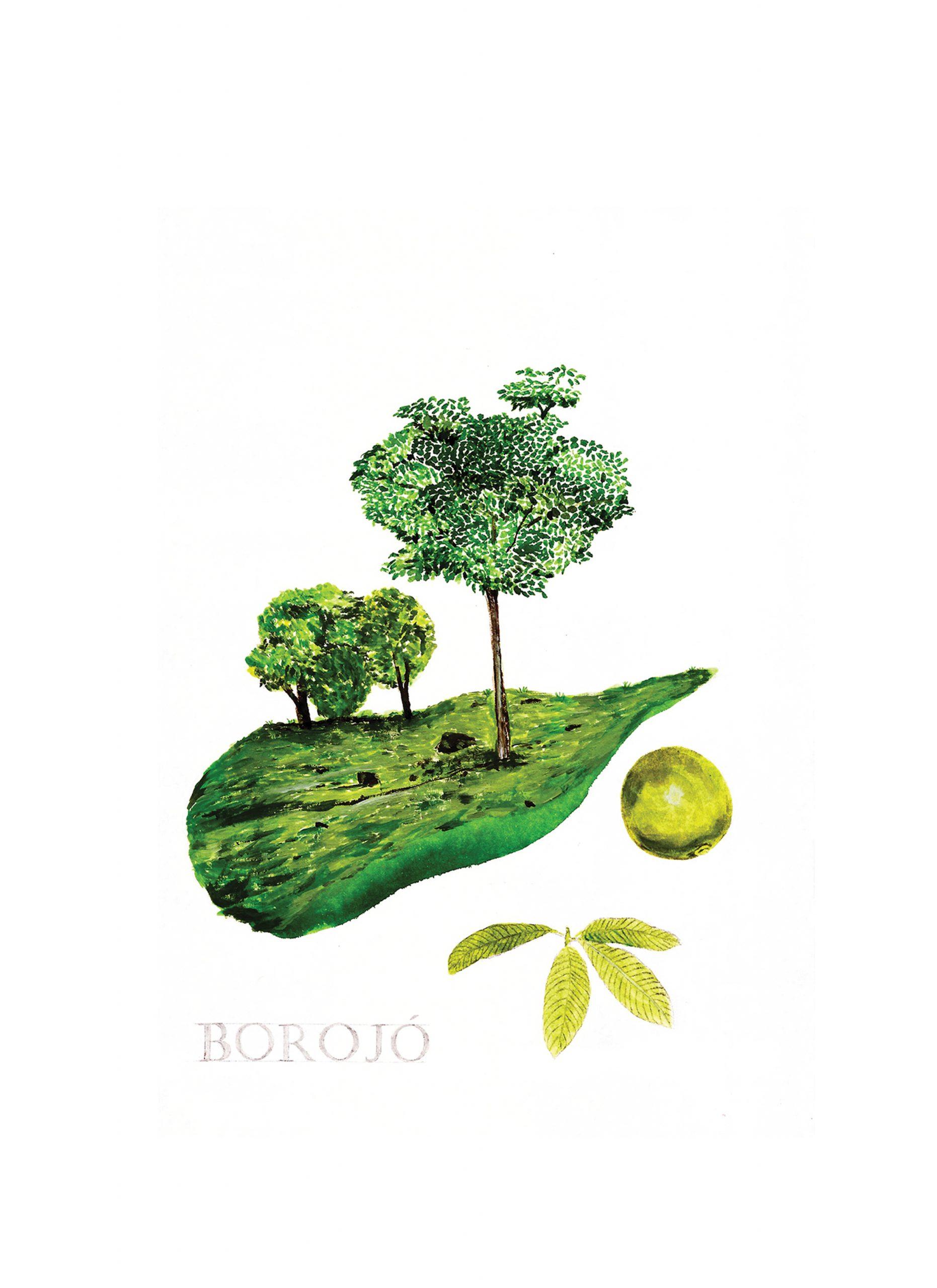 Borojó - Técnica mixta (acrílico sobre papel)